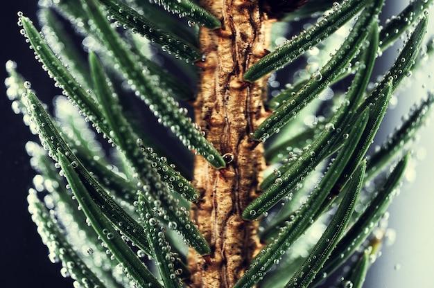 Fond de branches d'épinette