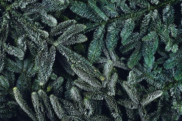 Fond de branches de sapin vert.