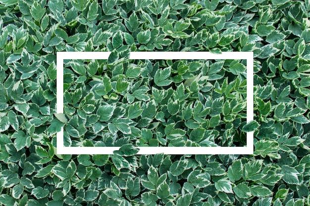 Fond de cadre blanc avec un feuillage de plantes luxuriantes