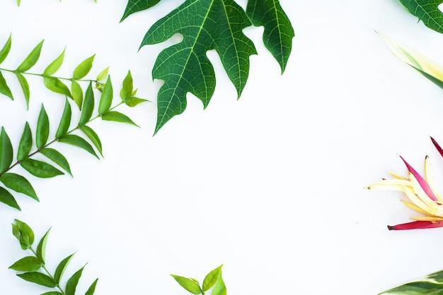 Fond de cadre de feuille verte en vue de dessus