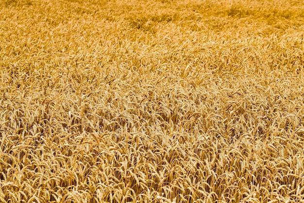 Fond de champ agricole