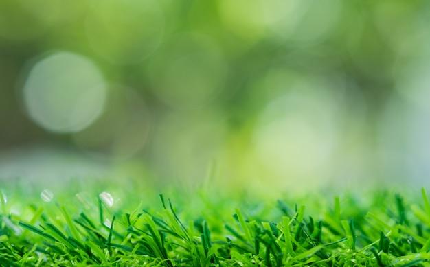 Fond de champ d'herbe, nature verte