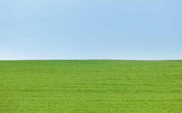 Fond de champ vert avec un ciel bleu