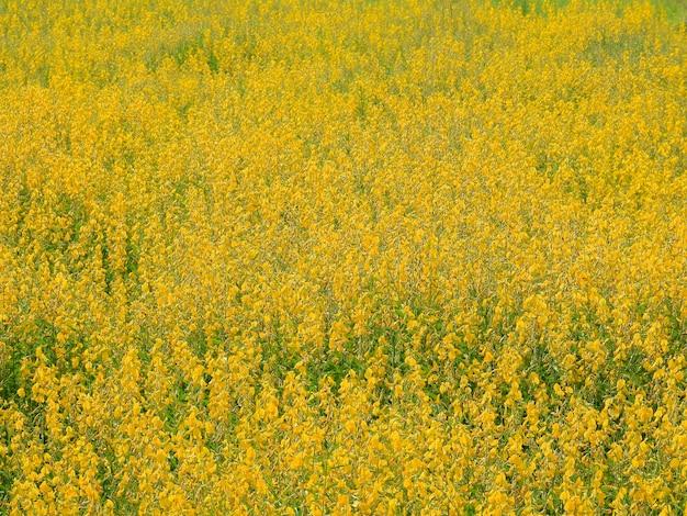 Fond de champs de fleurs jaunes