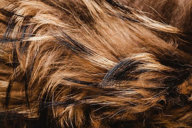 Fond de cheveux de chien plat