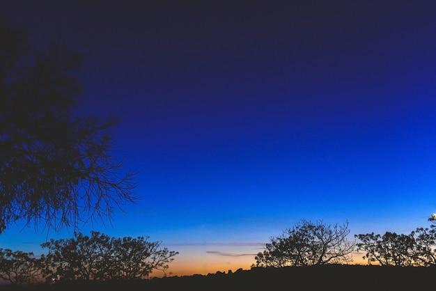 Fond de ciel au crépuscule avec des silhouettes d'arbres et d'horizon.