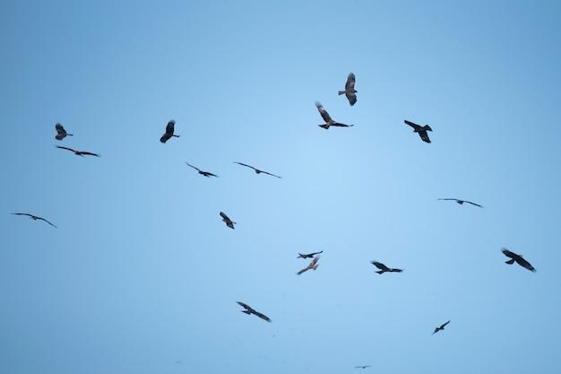 Fond de ciel et faucon