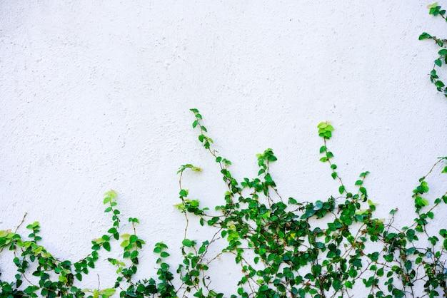 Fond de ciment blanc avec plante