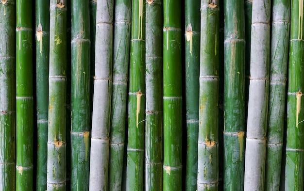 Fond de clôture en bambou vert