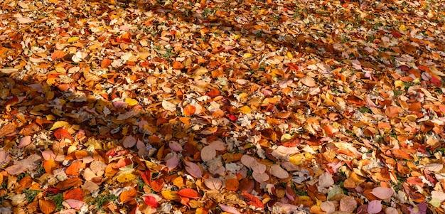Fond coloré de feuilles d'automne