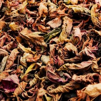 Fond coloré de feuilles tombées en automne.