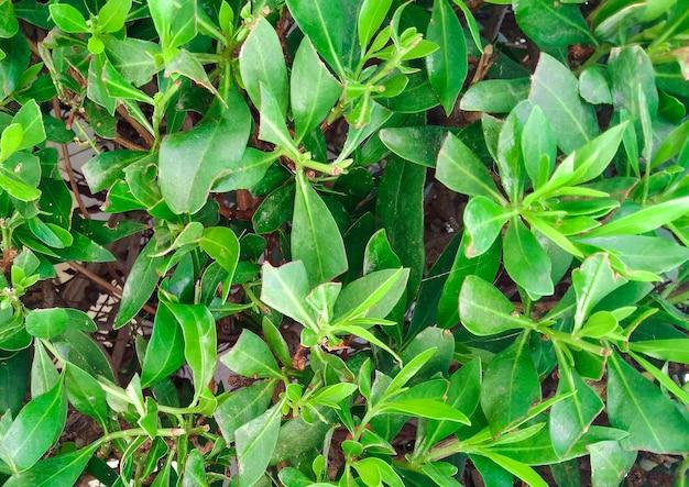 Fond coloré vert de belles tiges succulentes de plantes