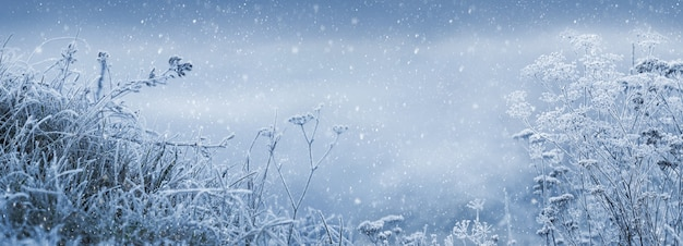 Fond de conte de fées d'hiver avec des plantes couvertes de givre lors d'une chute de neige. fond avec de la neige