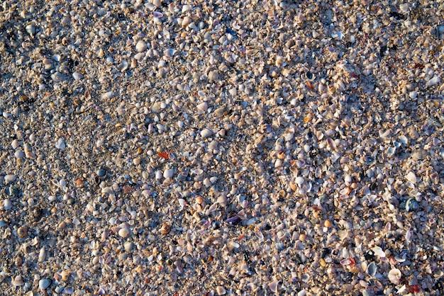 Fond de coquillages sur le sable à rimini