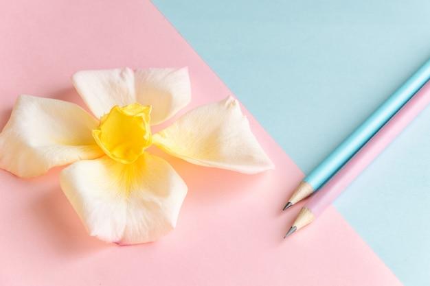 Fond de couleurs pastel fraîches avec concept créatif de création de fleurs et de crayons