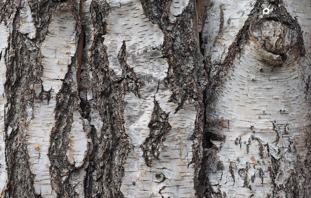 Fond d'écorce d'arbre brun