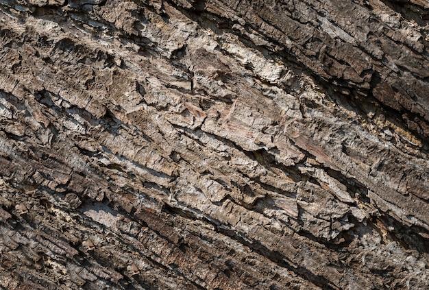 Fond d'écorce d'arbre. fond en bois, texture d'écorce d'arbre