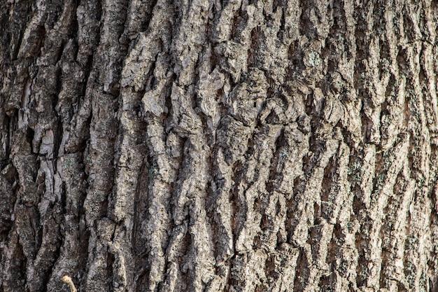 Fond d'écorce d'arbre naturel