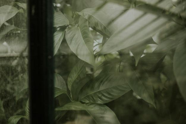 Fond d'écran de feuille sombre, image full hd esthétique