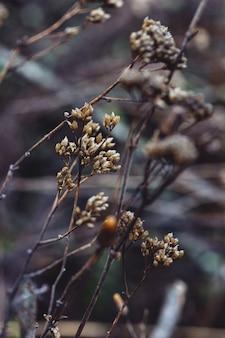Fond d'écran photo végétal. vieilles fleurs d'automne