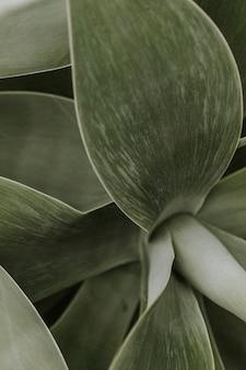 Fond d'écran de plantes succulentes, image sombre de la nature esthétique