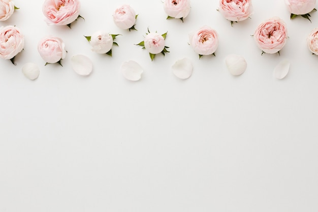 Fond d'espace copie blanche avec des roses