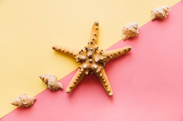 Fond de l'été avec des étoiles de mer