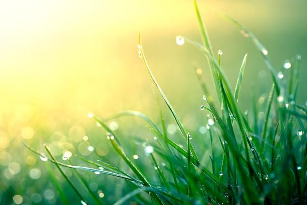 Fond d'été, herbe verte fraîche et gouttes de rosée