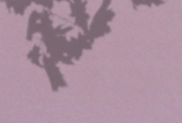 Fond d'été des ombres des plantes