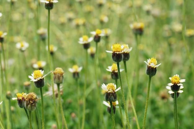 Fond d'été vue nature gros plan de fleurs jaunes