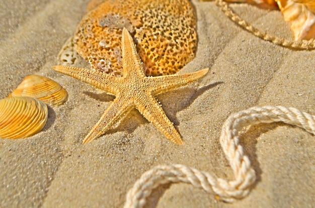 Fond d'étoiles de mer et coquillages