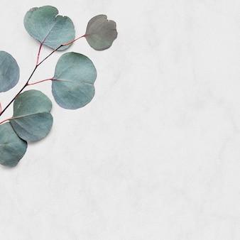 Fond d'eucalyptus tropical
