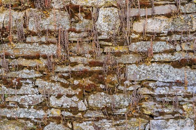 Fond de façade de maison ancienne avec des pierres et de la mousse.