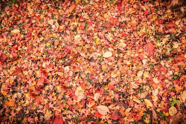 Fond fait de feuilles d'automne tombées
