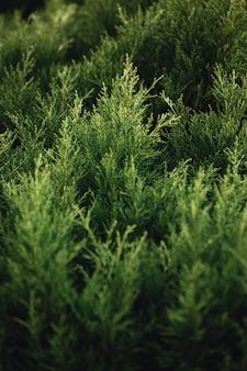 Un fond fait de quelques plantes vertes super vives
