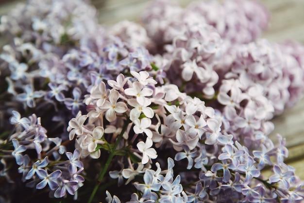 Fond de fête des mères avec des fleurs lilas