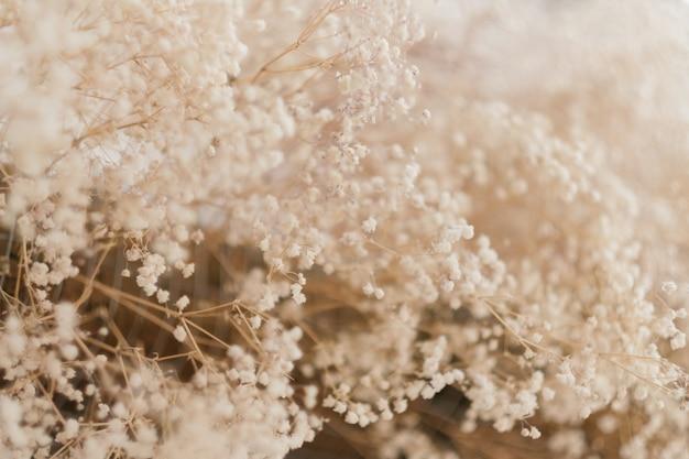 Fond de feuillage séché. composition florale.