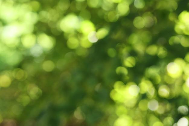 Fond de feuillage vert défocalisé