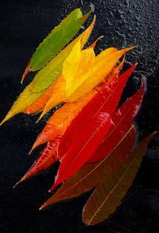 Fond de feuille d'automne coloré. palette de feuilles d'automne