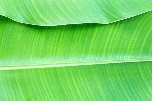 Fond de feuille de bananier tropical, espace copie