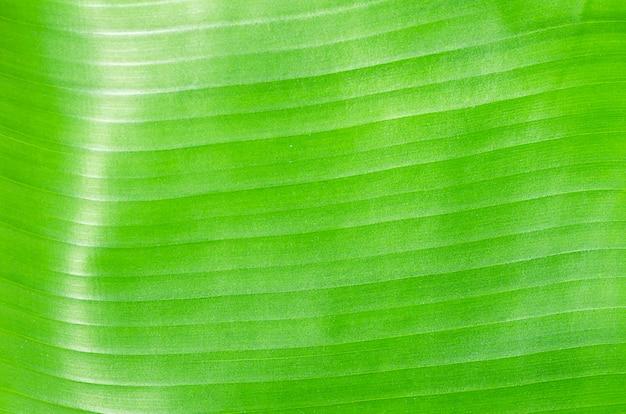 Fond de feuille de bananier vert texturé