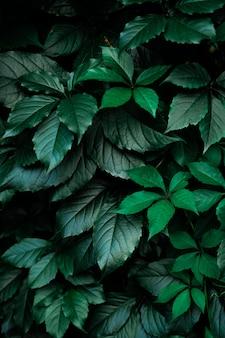 Fond de feuille de feuillage vert foncé