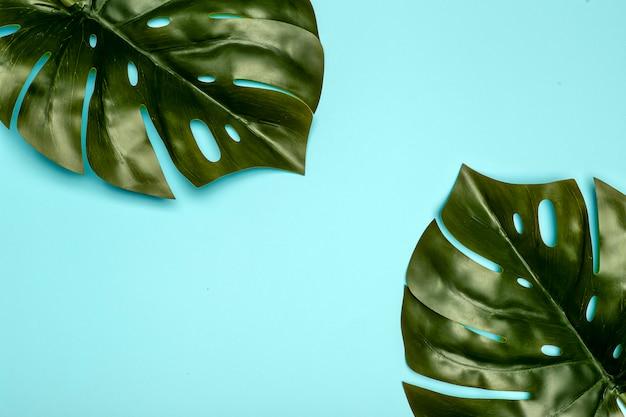 Fond de feuille de monstera. feuilles de palmier de jungle tropicale sur fond pastel de couleur. espace copie