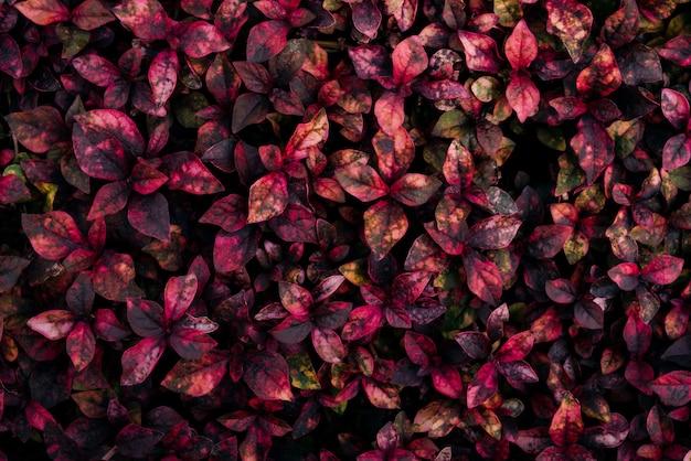 Fond de feuille rouge nature concept de fond