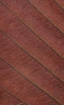 Fond de la feuille sèche brune