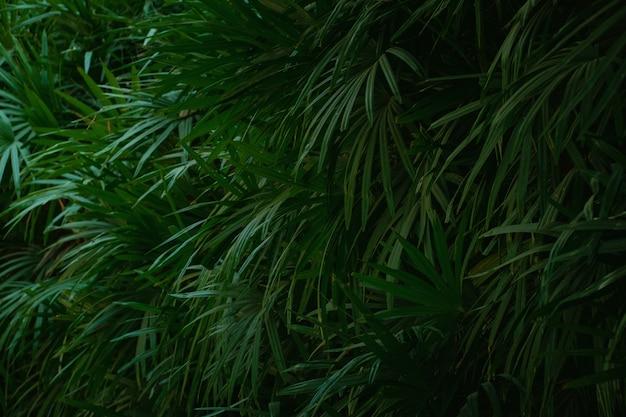 Fond de feuille verte. feuillage de la plante dans le jardin.