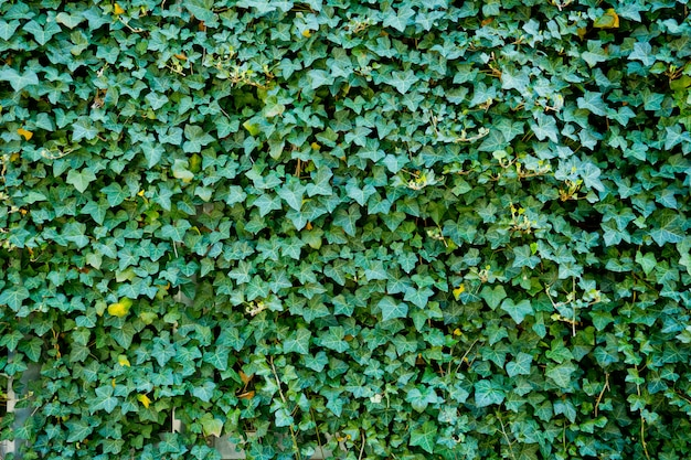 Fond de feuille verte. feuilles