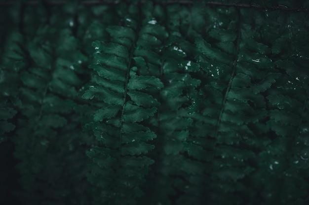 Le fond de feuille verte montrant l'amour de la nature et de l'environnement