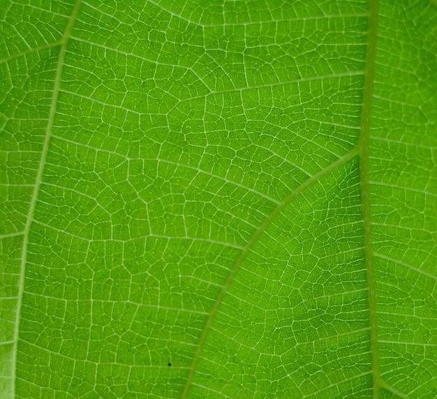Fond de feuille verte naturelle sélectionnez une mise au point spécifique