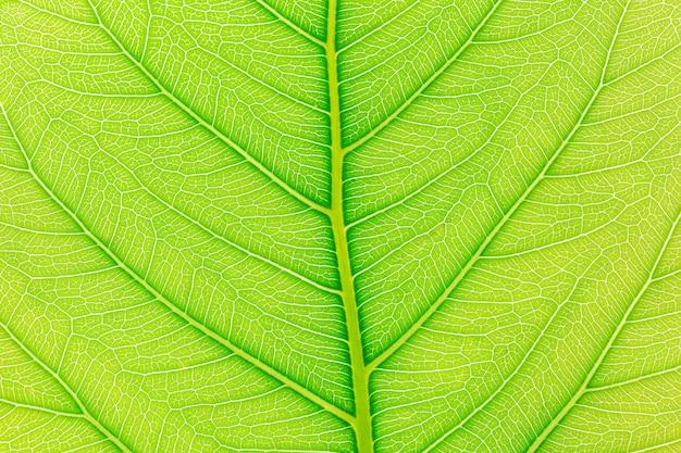Fond de feuille verte naturelle